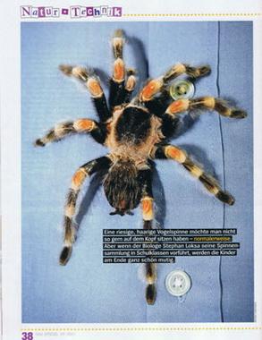 Spinnenprojekt